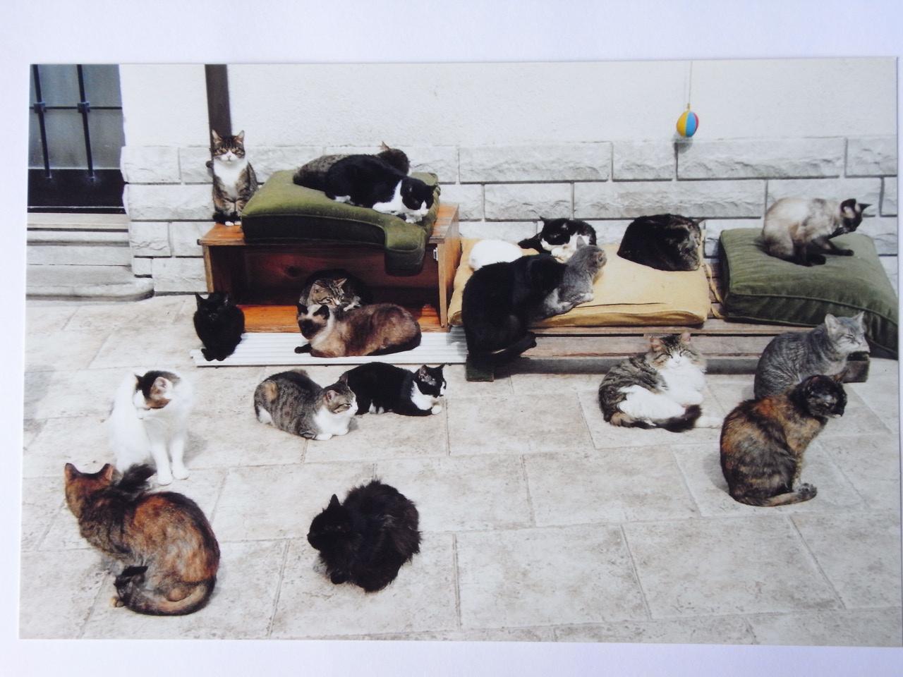 Il Gattile, cortile via Fontana 4 Trieste