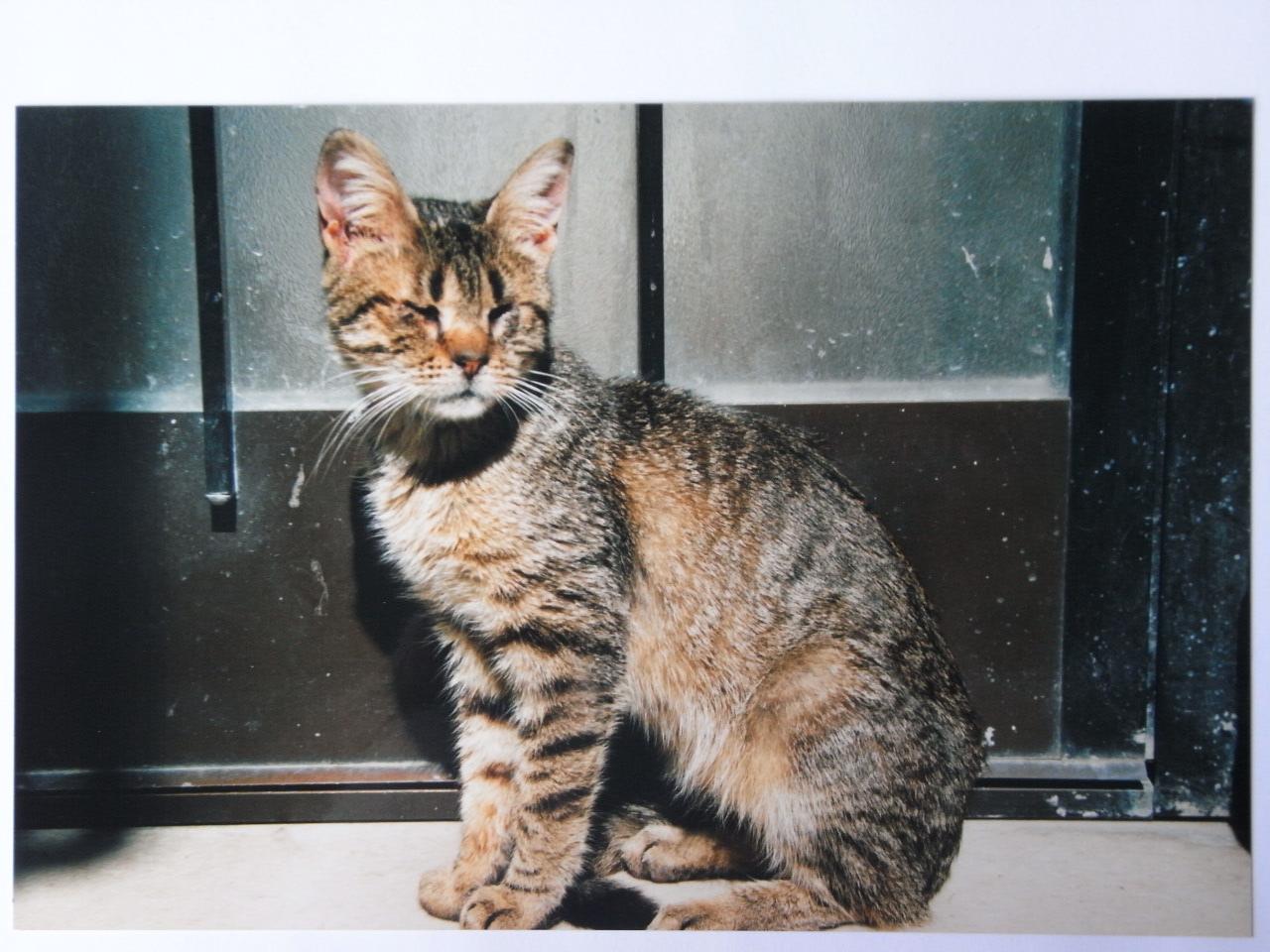 storia Gattile, cieco