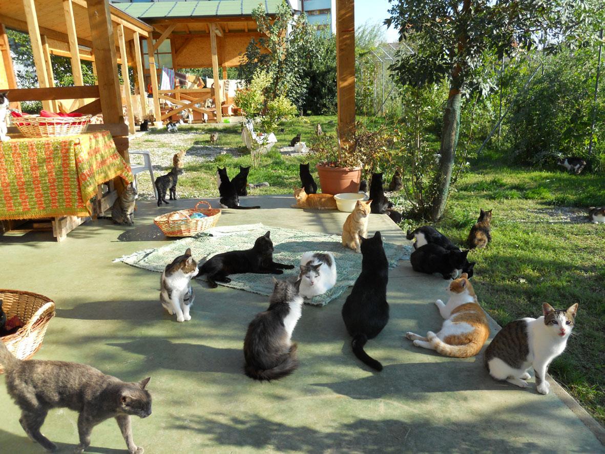 "Oasi felina Trieste dedicata a ""Miranda Rotteri"""